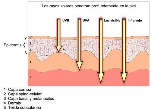Como afectan los rayos UVB en tu piel